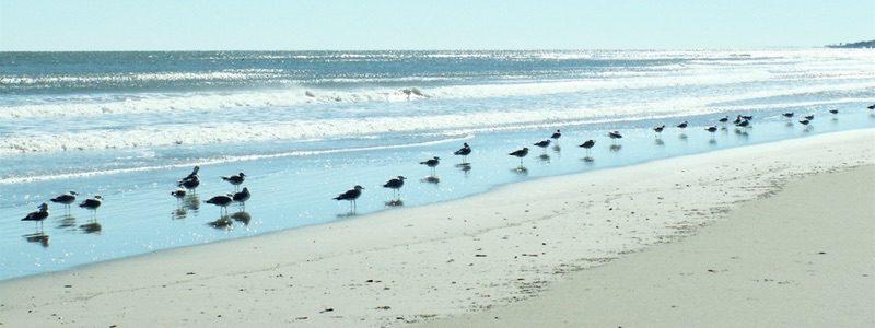 Pawleys Island beach