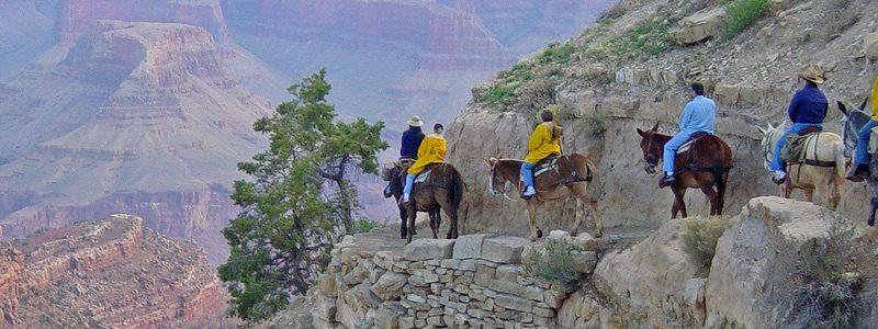 Grand Canyon Mule Ride