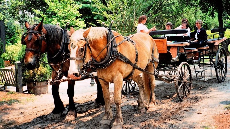 The Carriage Tour