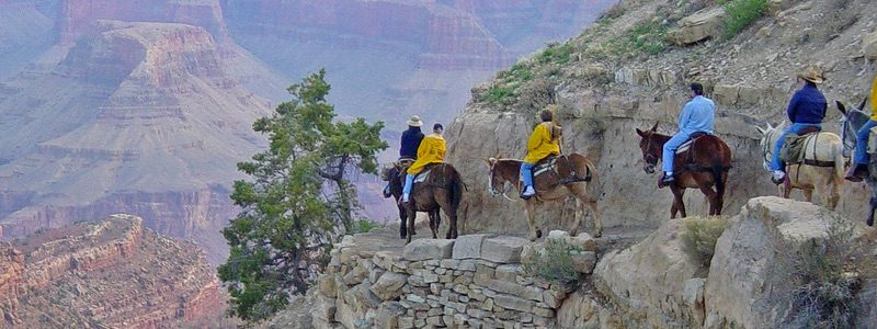 Grand Canyon Mule Ride